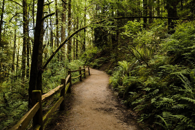 portland-nature-Woodlands-oregon-green-trail-hiking-destination-engagement-elopment-photographer.jpg