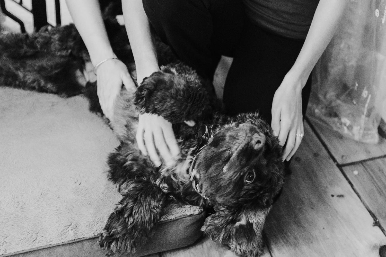 dog-cute-wedding-day-preperation-new-england-engagement-bride-puppy-animal-lovers-new-england-rehoboth-massachusetts.jpg