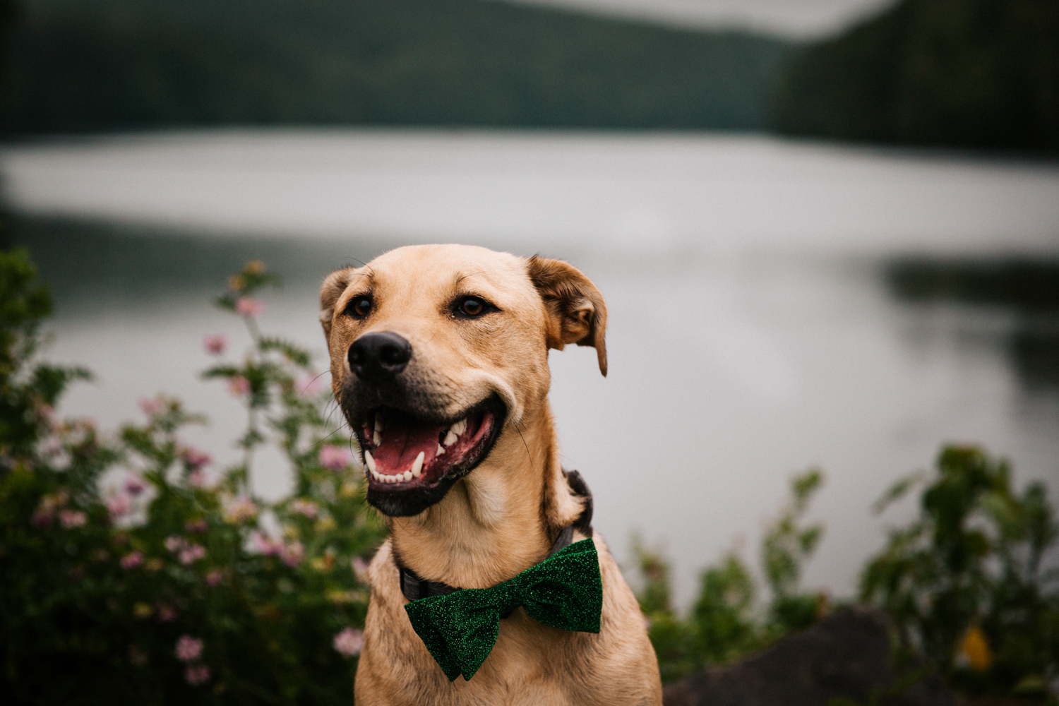 giuffrida-park-engagement-session-dog-puppy-bowtie-new-england-engagement-photographer.jpg