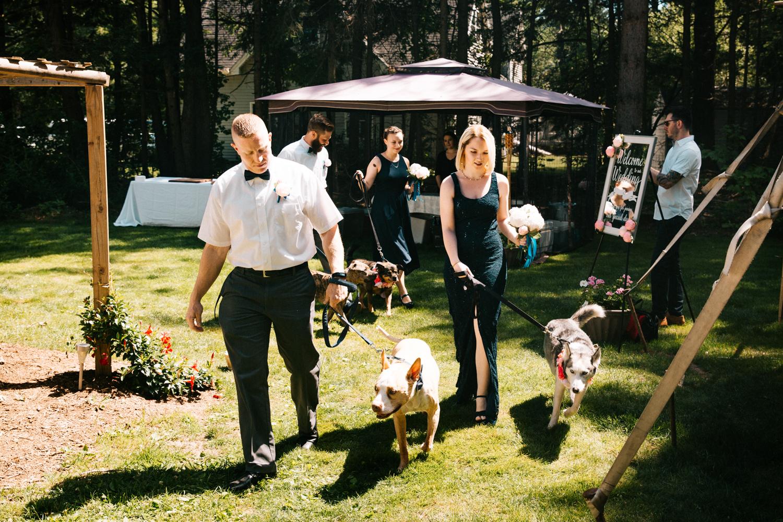 dogs-wedding-ceremony-backyard-laid-back-ct-ri-ma-new-england-granby-connecticut.jpg