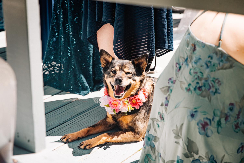 dog-wedding-flowers-puppy-connecticut-rhode-island-massachusetts-pet-wedding-photographer.jpg