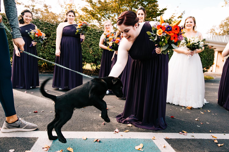 puppy-wedding-dog-new-england-US-destination-elopement-photographer.jpg