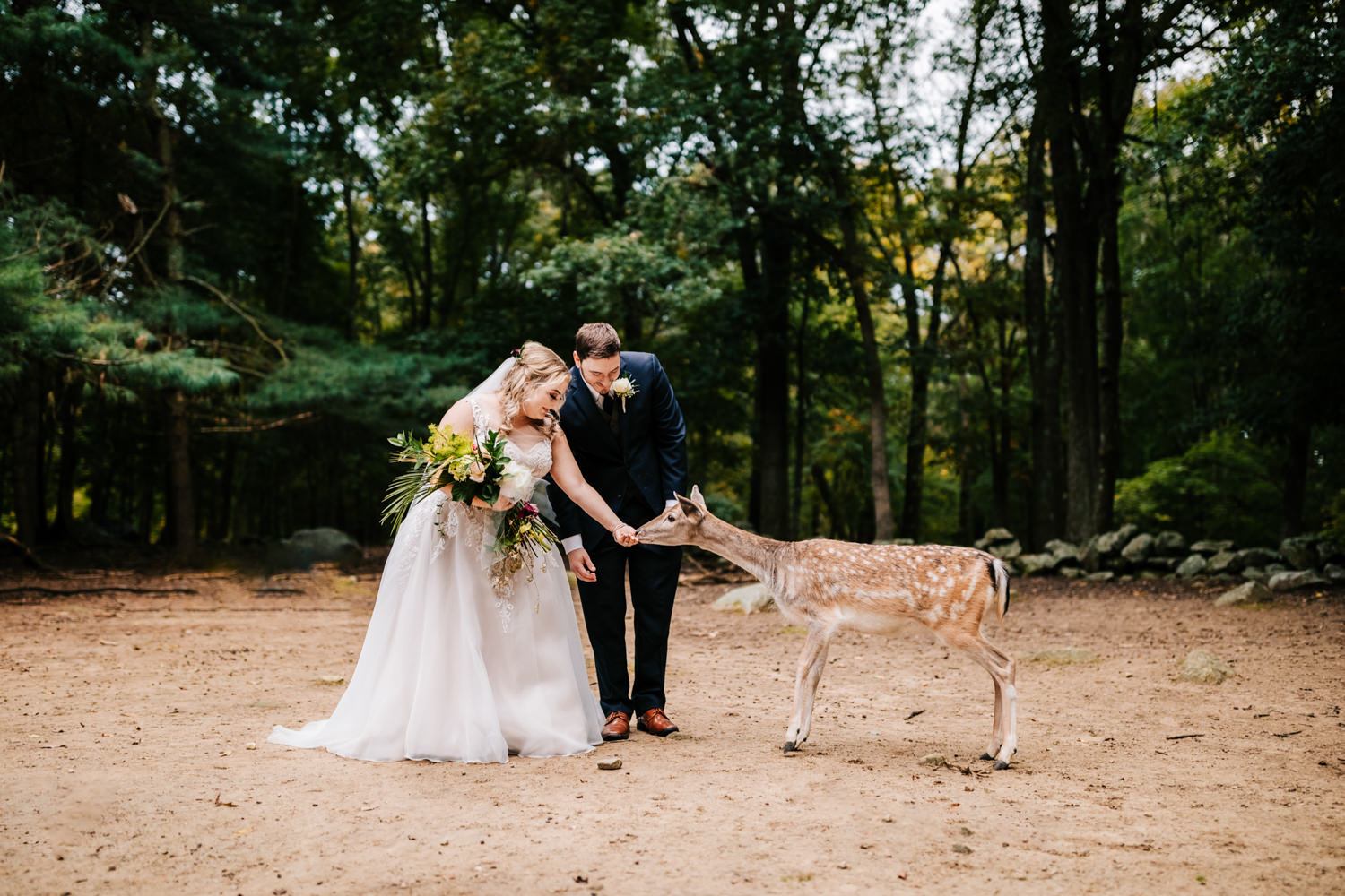 Bride and groom feeding a deer
