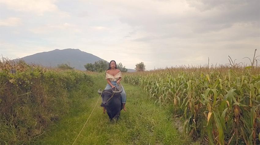 Caroline Garcia,  Queen of the Carabao  (video stills), 2018