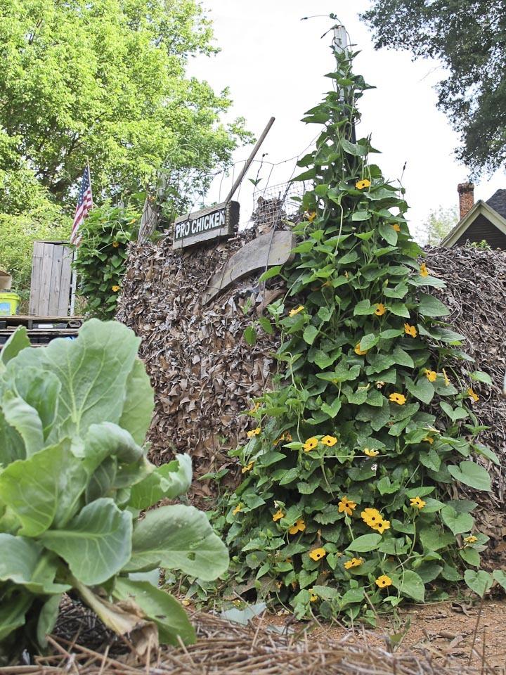 community garden-1542.jpg