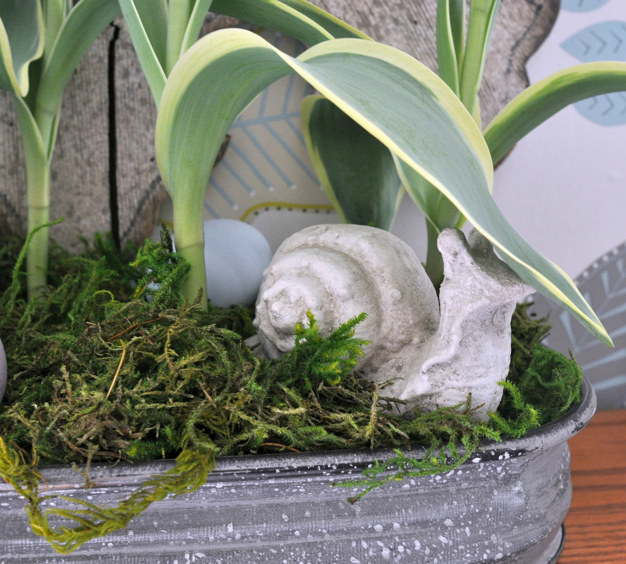 decorative_snail_with_plant