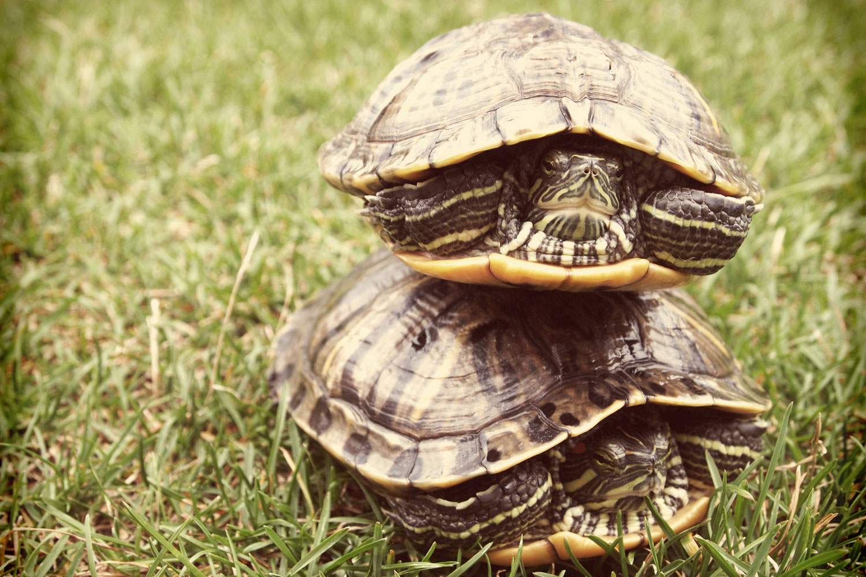 iQ_BKG_Site_GA_Turtles.jpg