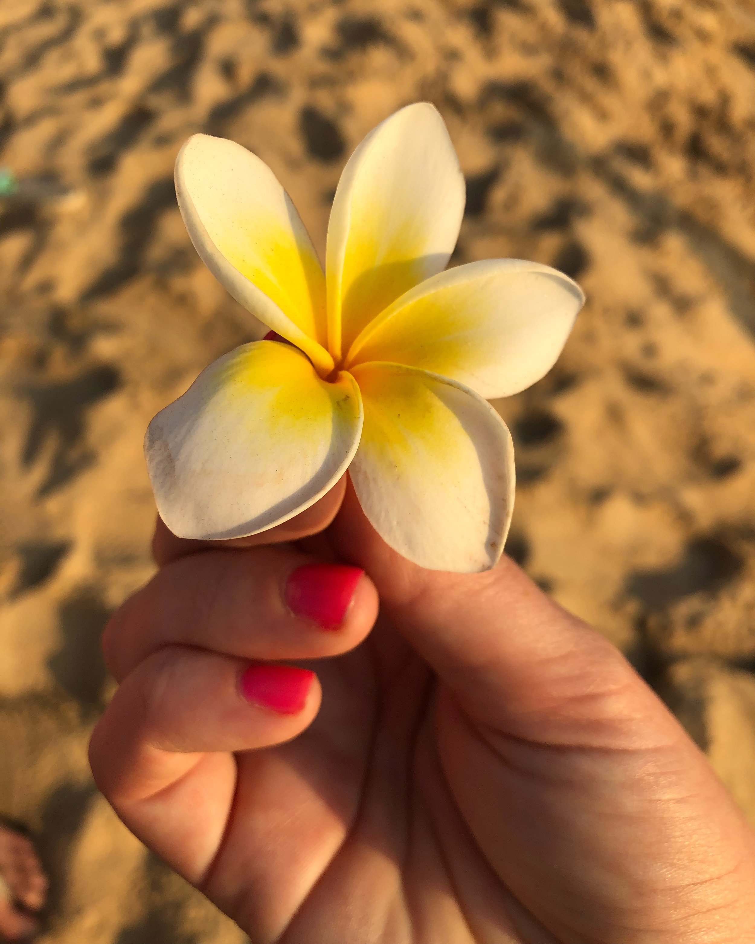 A Plumeria flower, or Champa as they call it in India