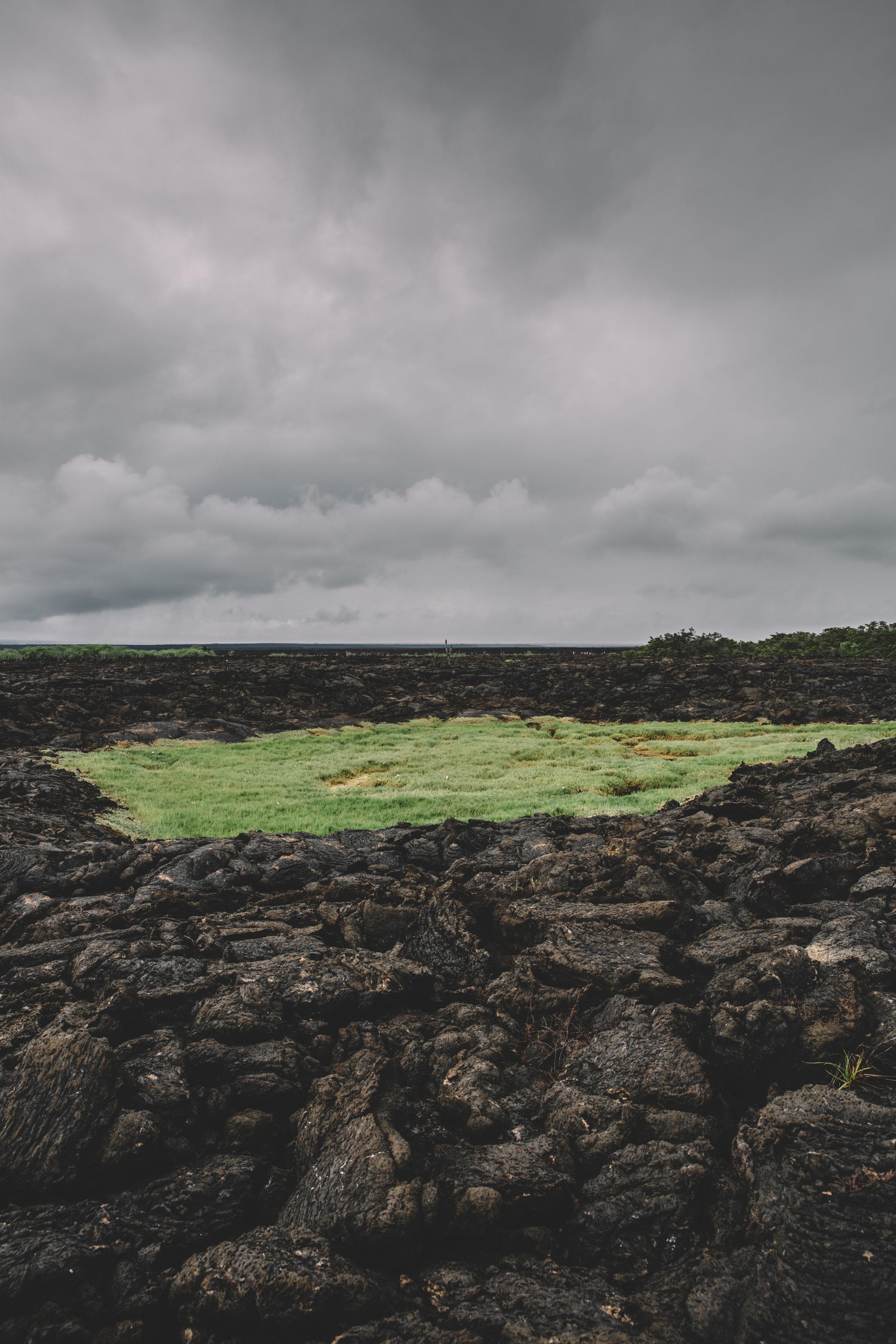 Galapagos-130.jpg