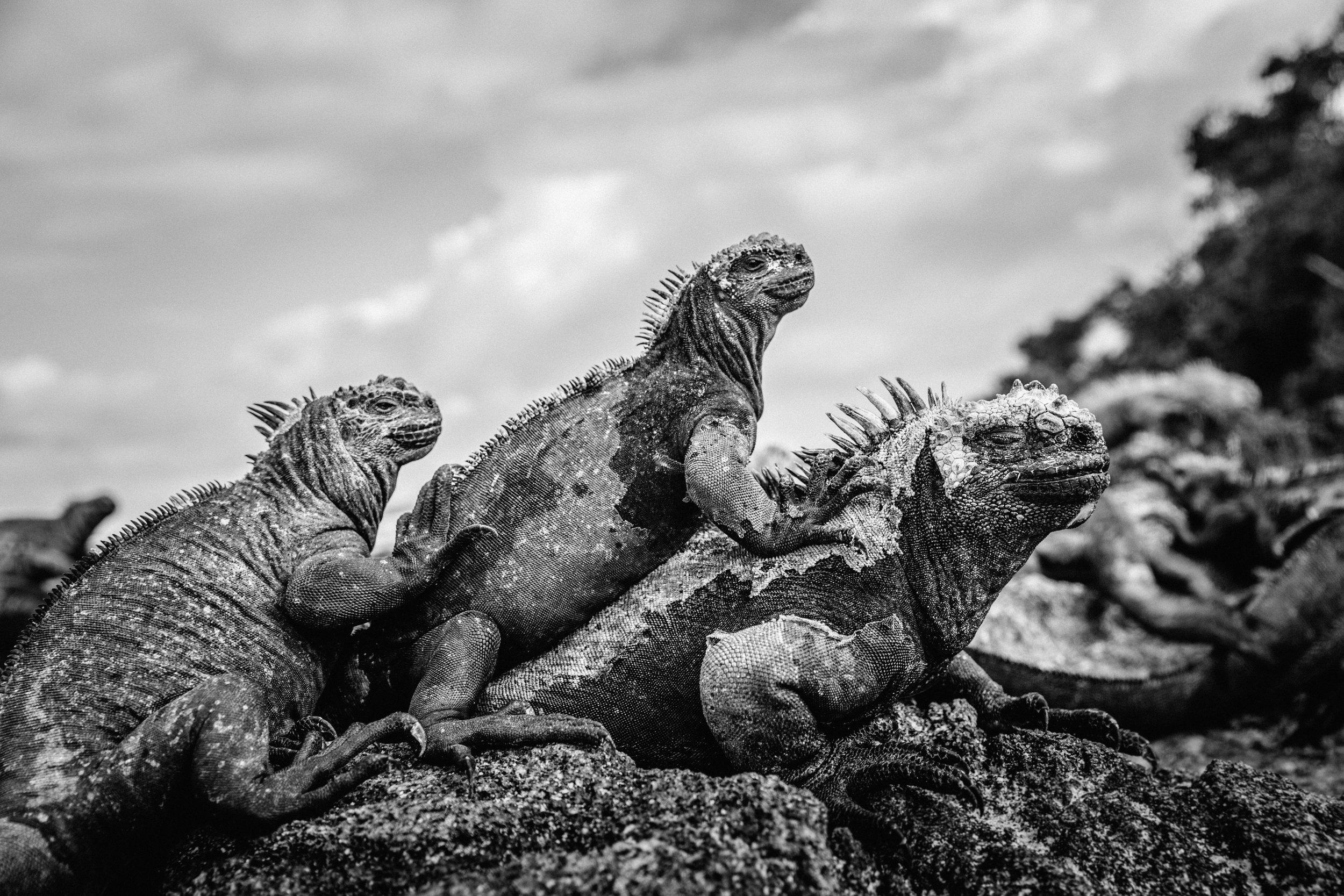 Galapagos-159.jpg
