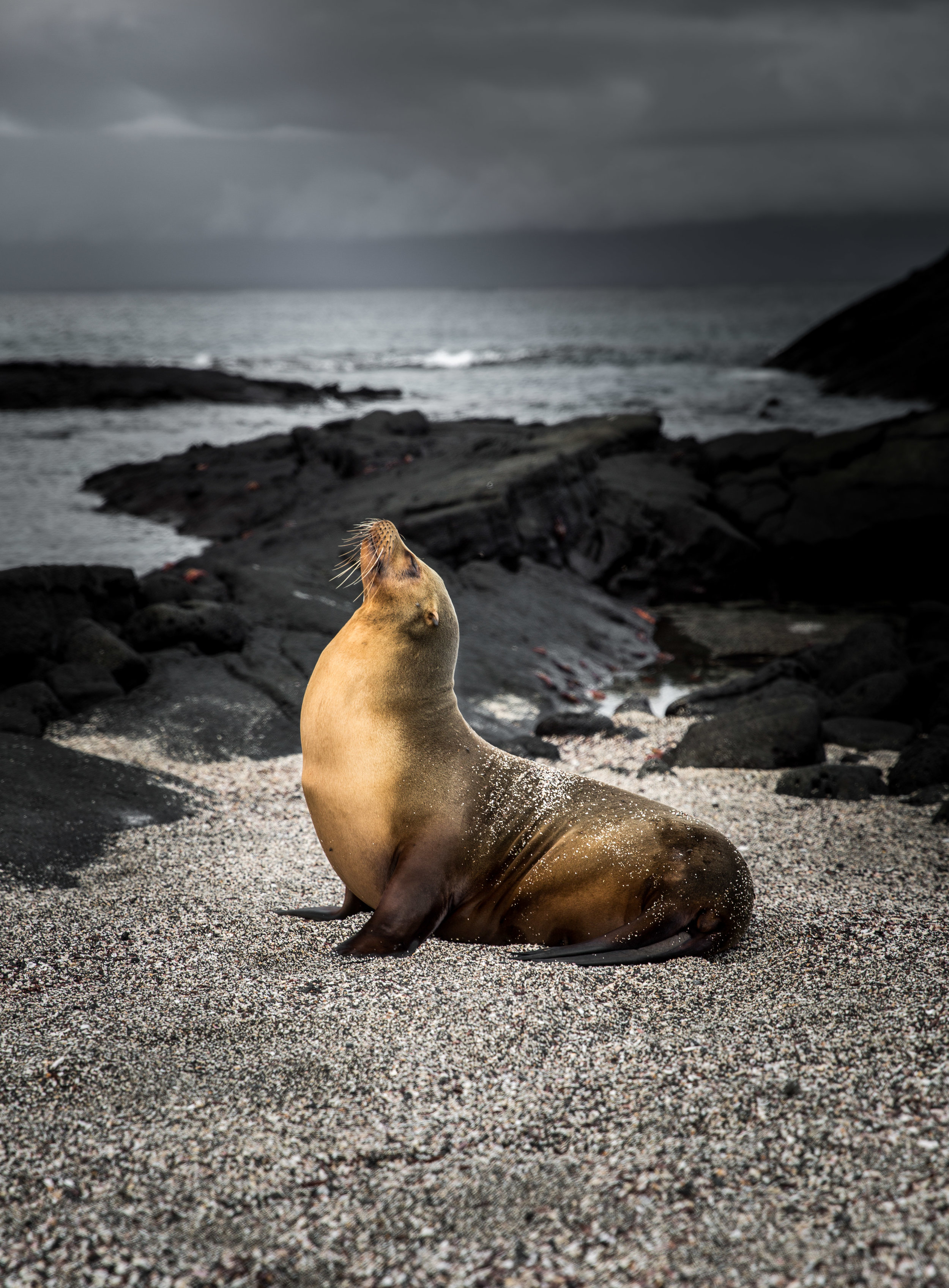 Galapagos-168.jpg