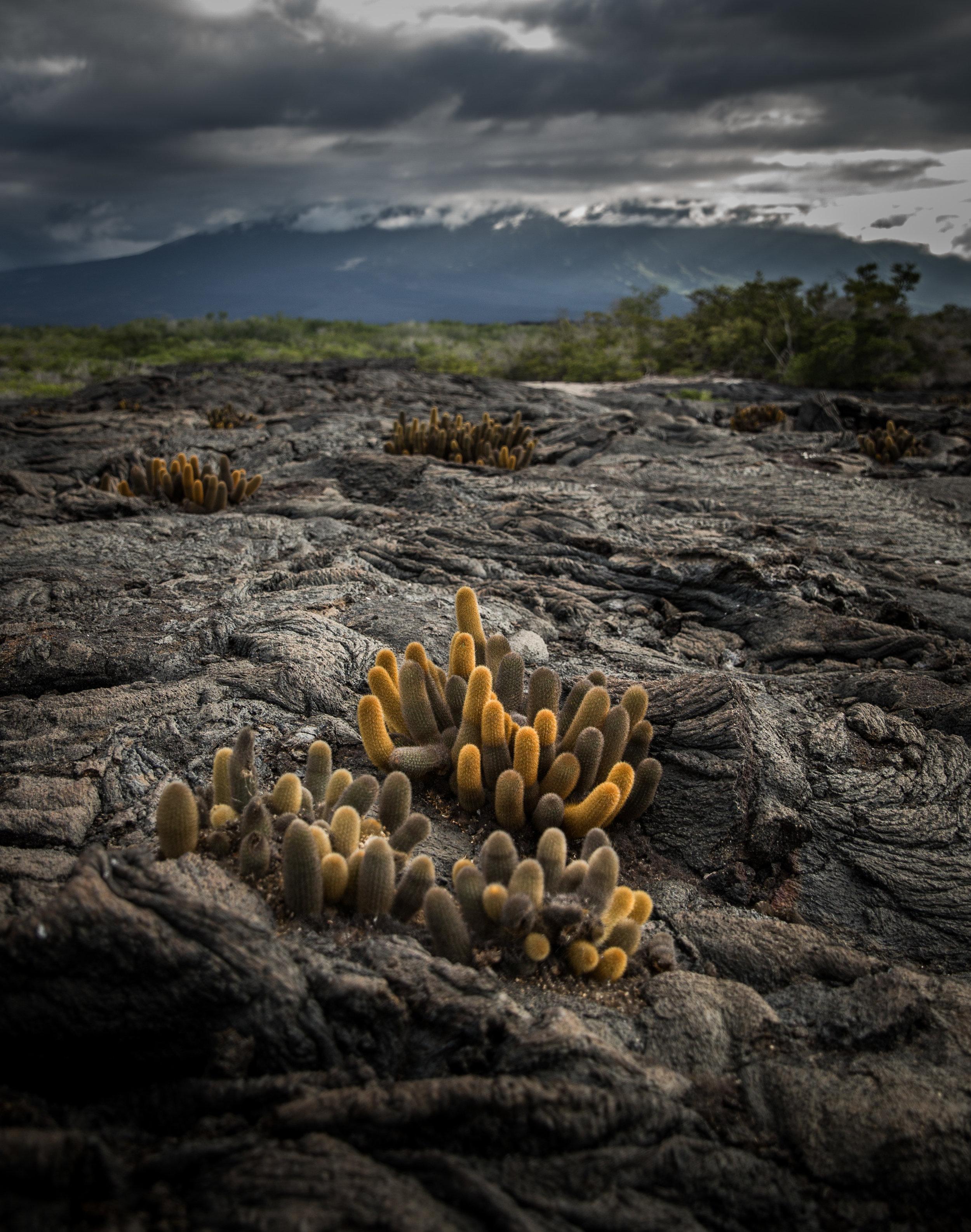 Galapagos-177.jpg