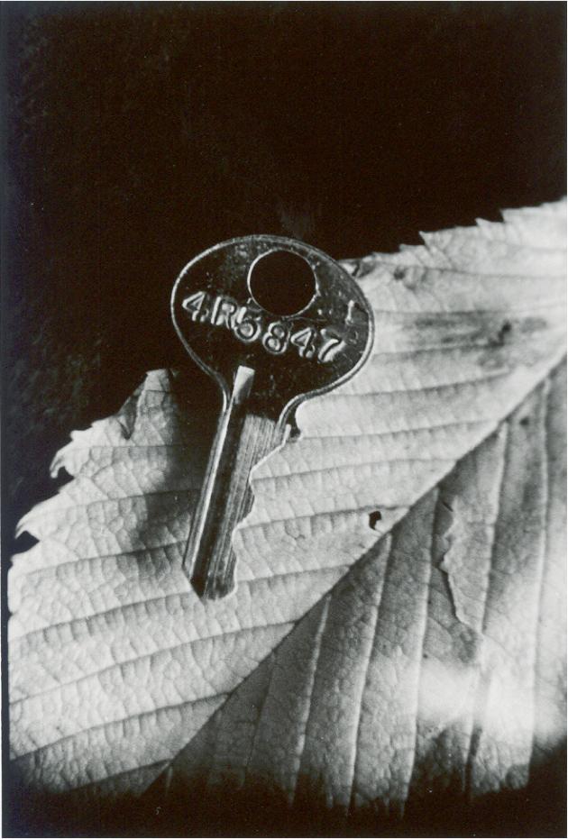 SL-keyleaf-01.jpg