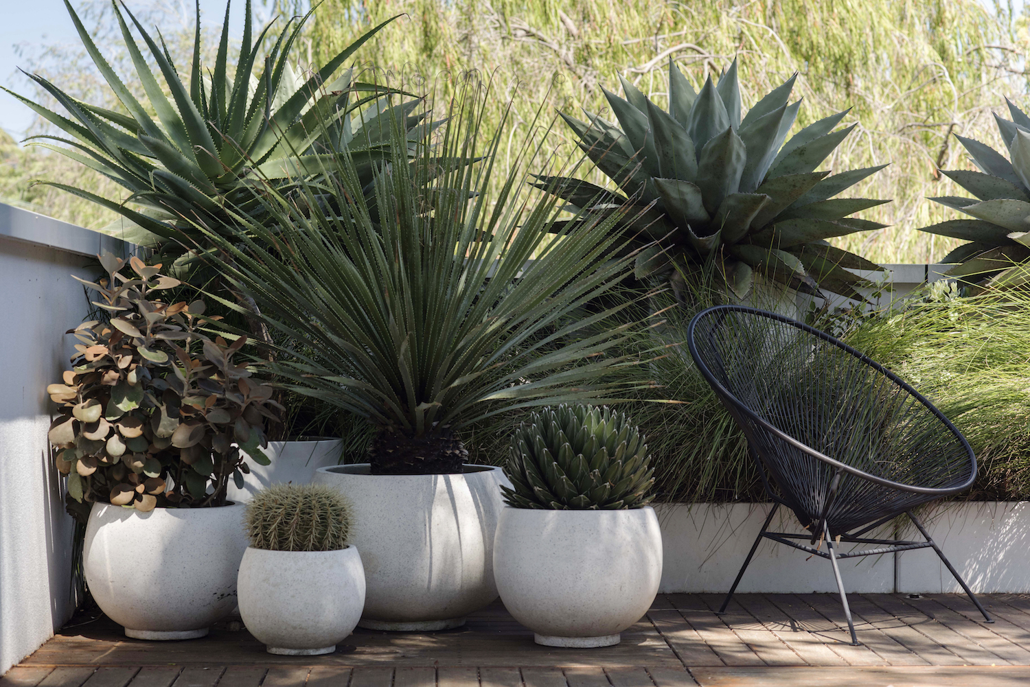 Texas Nativescapes Agaves and Architectural Planters .jpg