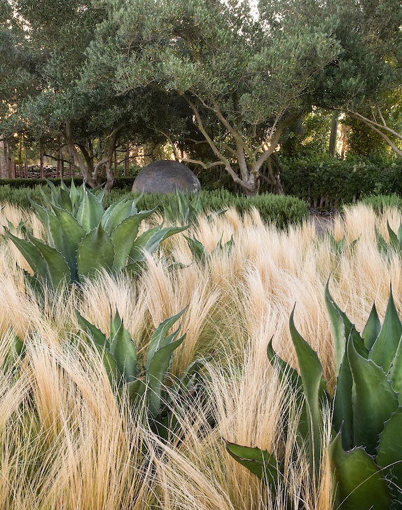 Texas Nativescapes Agaves and Grass .jpg