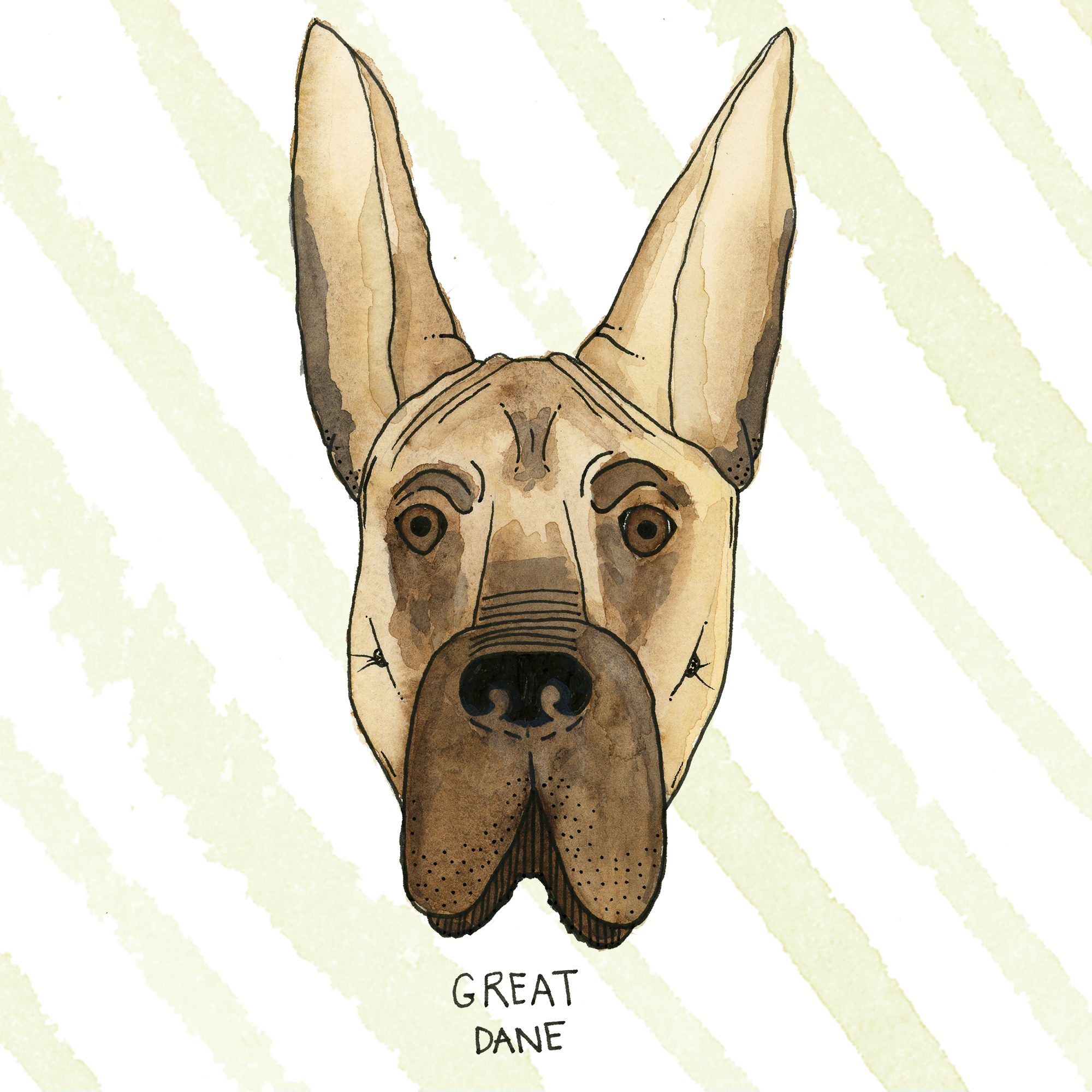GreatDane.jpg
