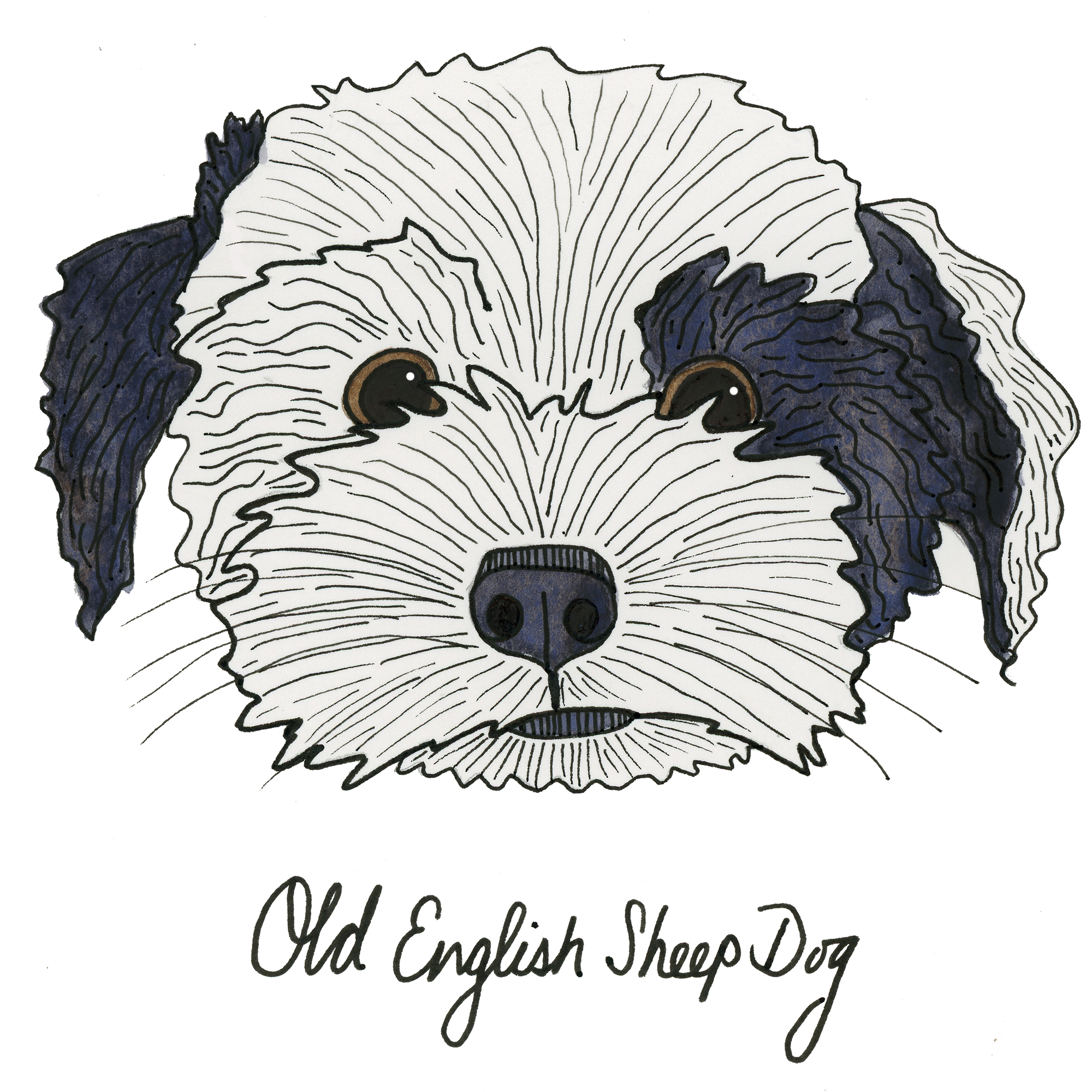 OldEnglishSheepDog.jpg