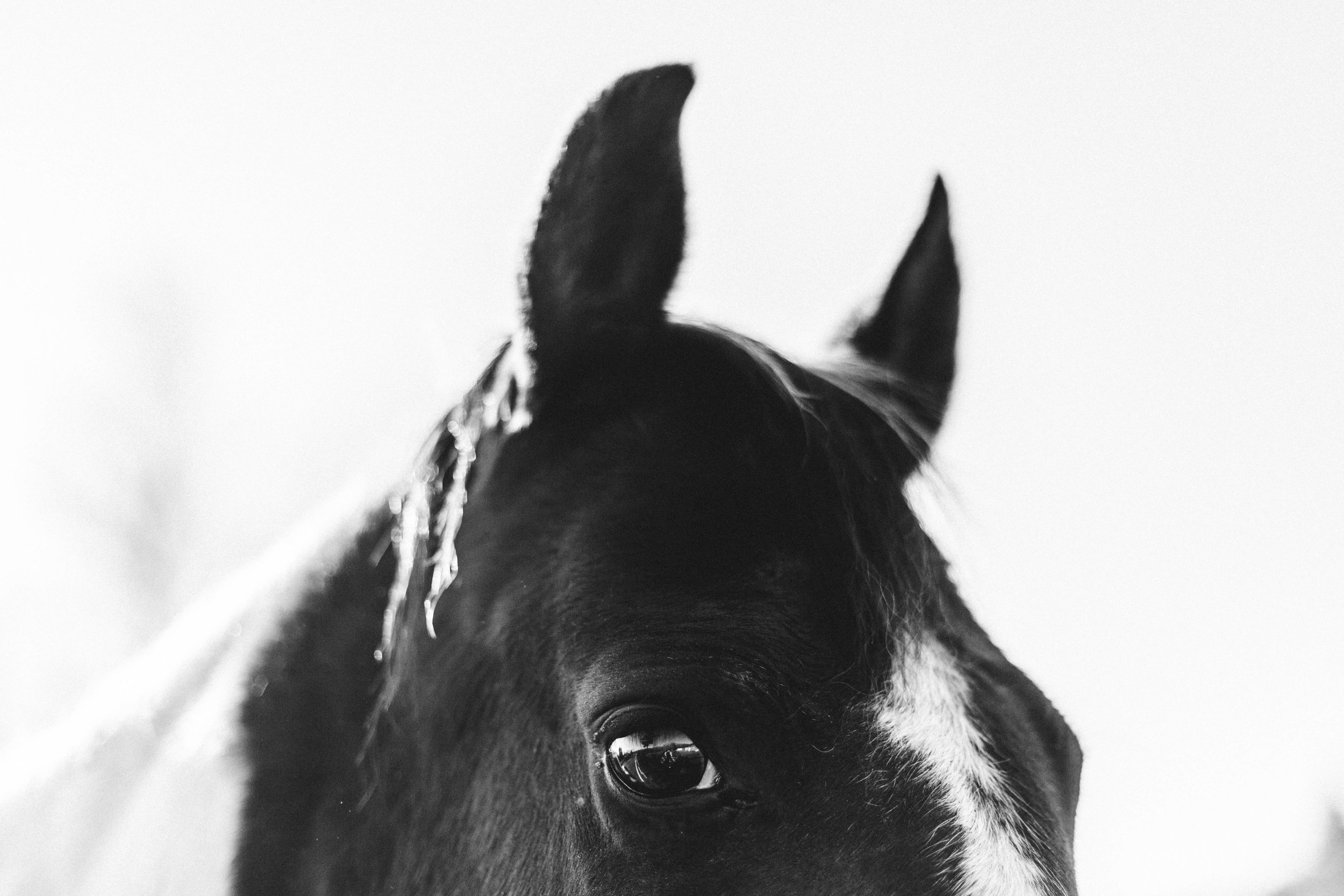 Horse Farm Engagment - Sabrina Leigh Studios - Northern Michigan Wedding Photographer 37.jpg