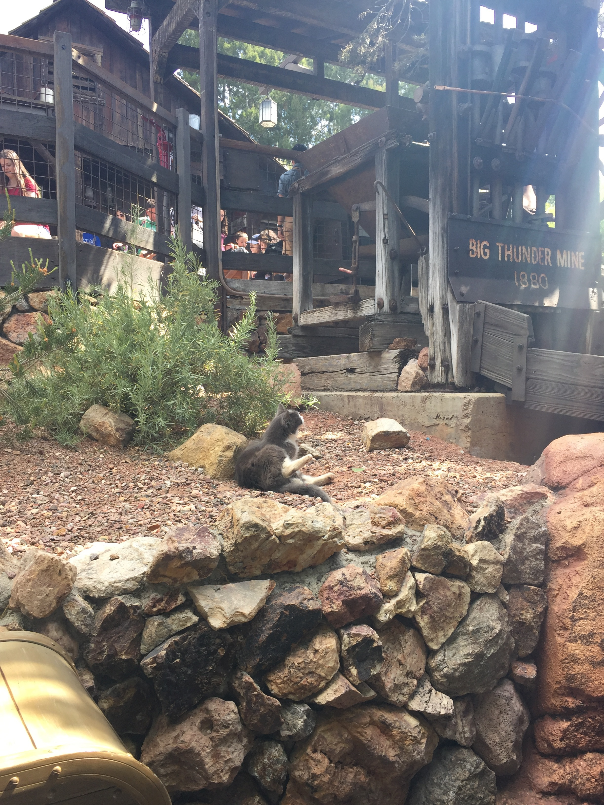 Yes, that's a real cat in the line for Big Thunder Mountain Railroad--and she was totally fine with all of us watching her!