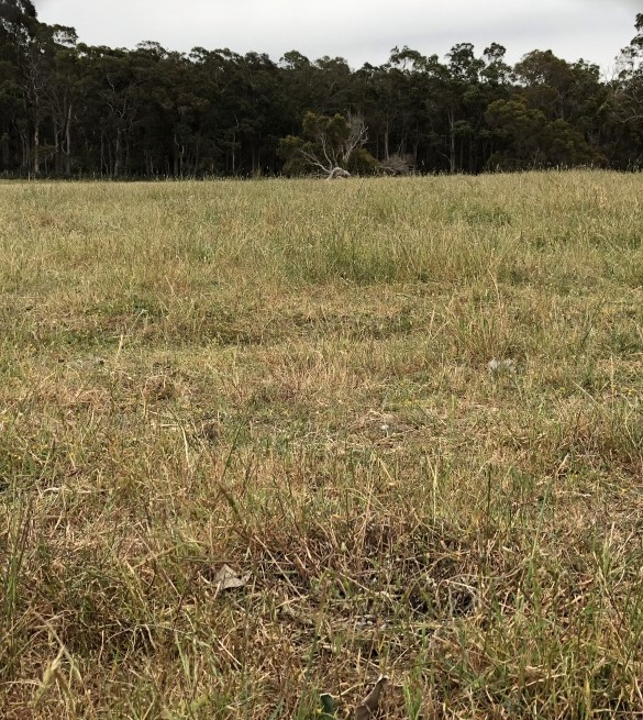 Guildford Grass Control Paddock November 2018