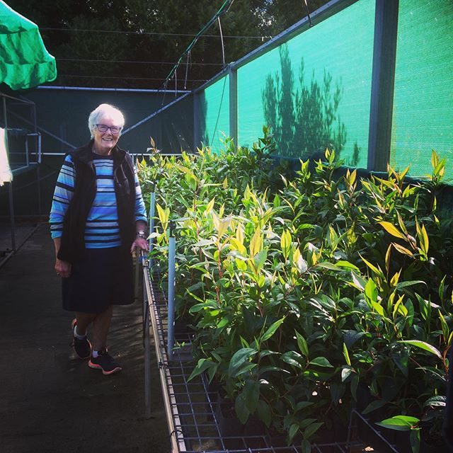 The marvellous Jan White at the Augusta community Nursery with peppermint trees ready to be planted along Creekline at Warner Glen.  The Augusta P.S students collected seed and grew these plants and will be planting them out during there catchment tour at the end of June. #lowerblackwood #sustainableagriculture #lowerblackwoodcatchment #lowerblackwoodlcdc #riparianrevegetation #juniorlandcarers