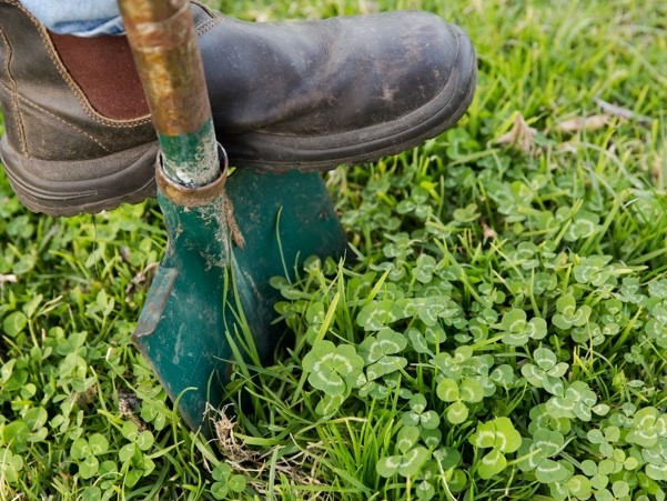 1. Dig out 5 - 10 plants per location in the paddock