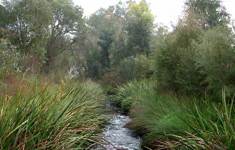 Bannister-Creek2.jpg