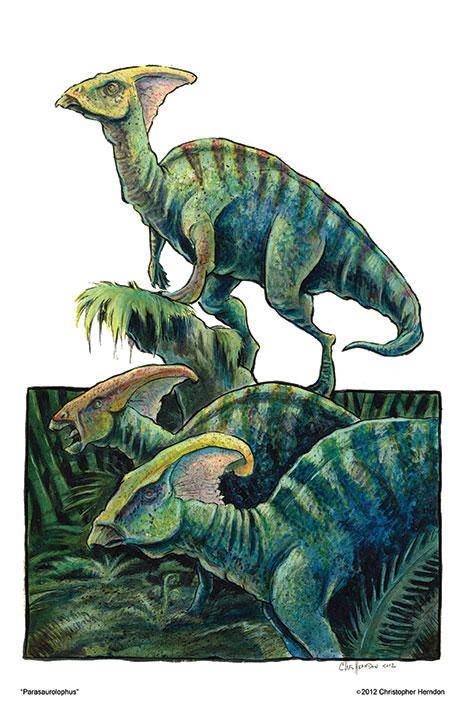 2012ParasauralophisPrint01.jpg