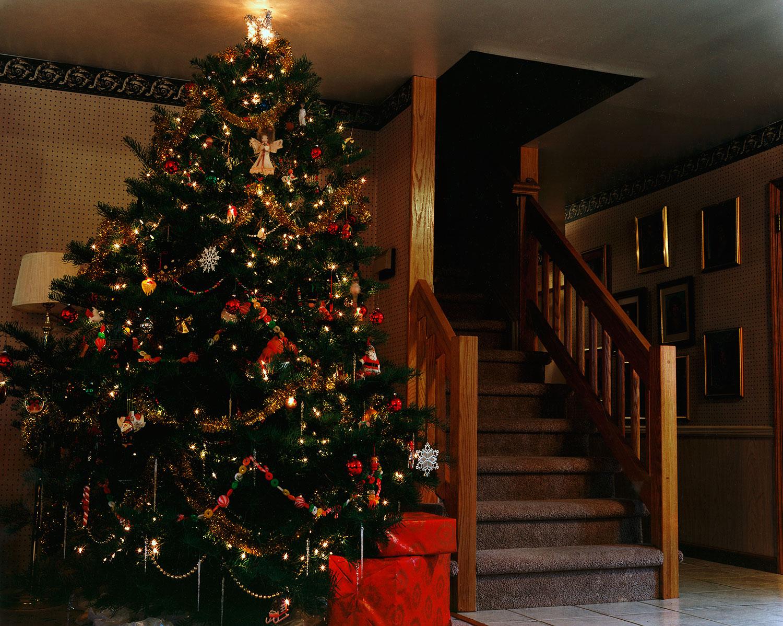 christmas.tree.jpg