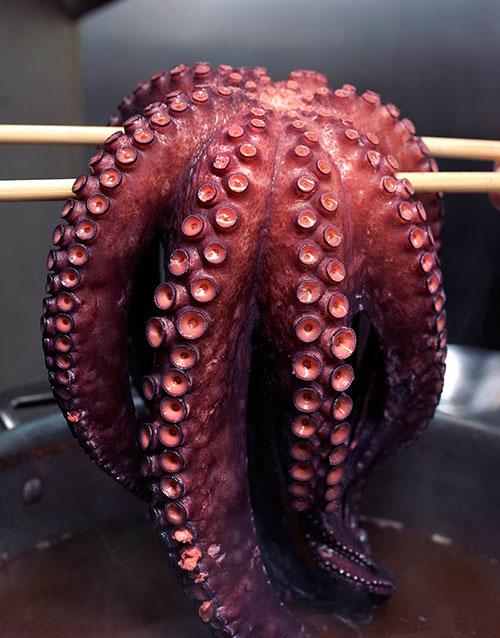 15eOctopusA.jpg
