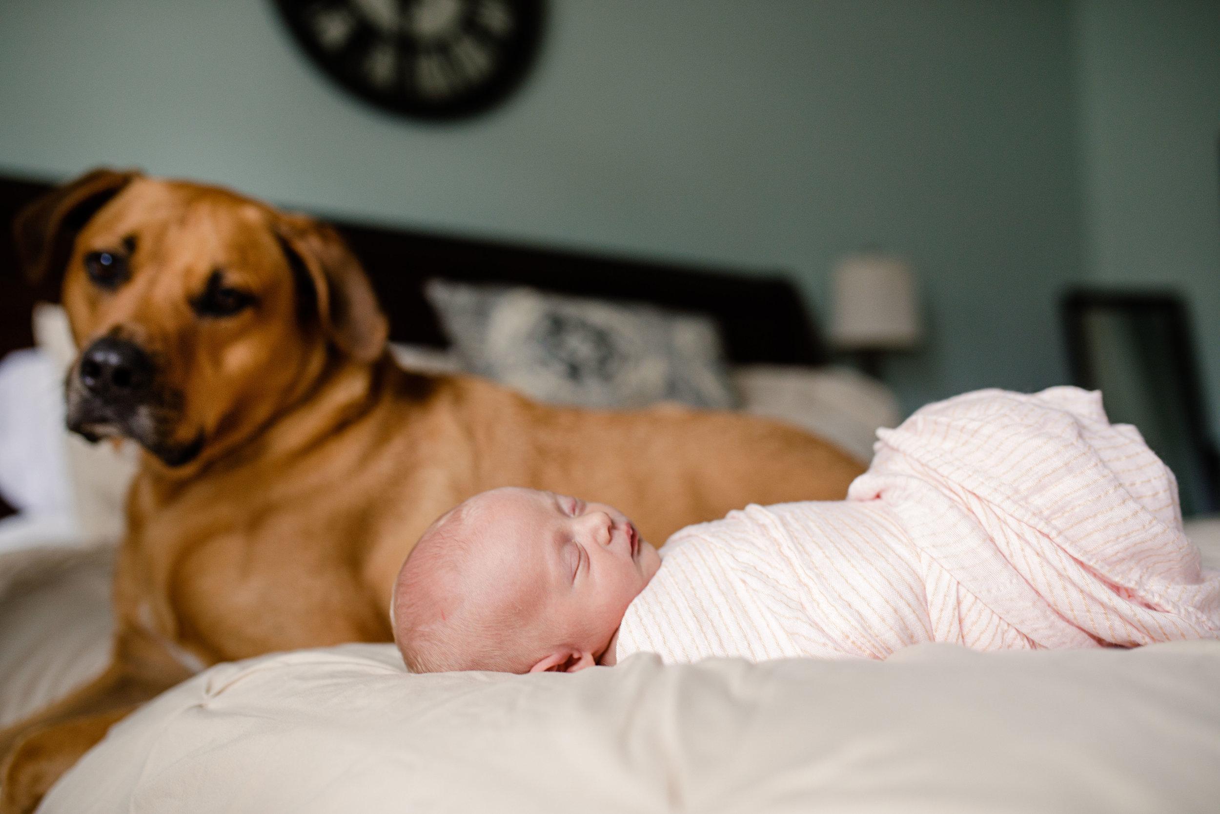 Jupiter Palm Beach Newborn Photography