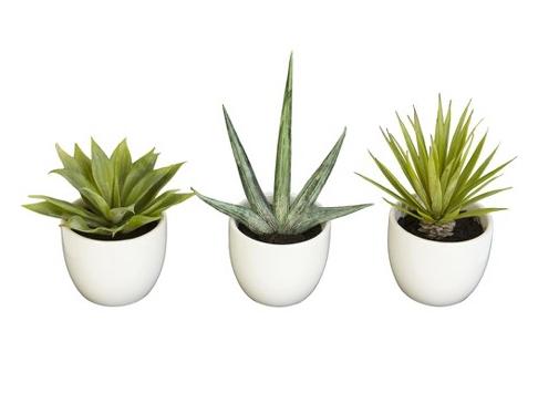 Target  Faux Succulents  $35.99 (sale)