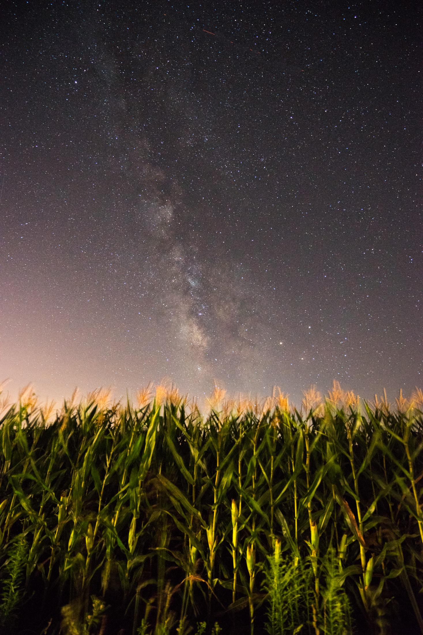 Milky Corn Fields-01-Aug2016 (1 of 1).jpg