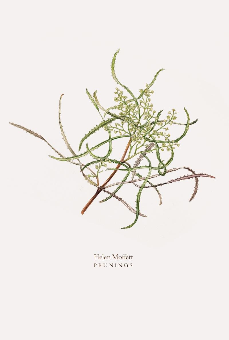 Helen Moffett,  Prunings