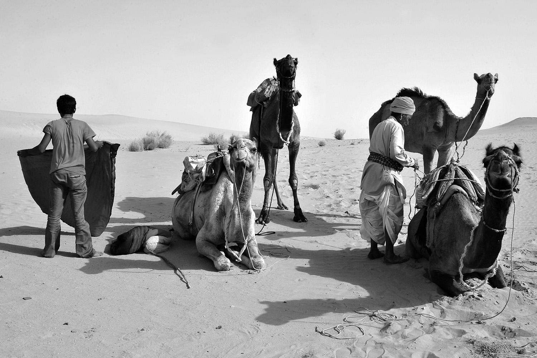 《黄金城市杰伊瑟尔梅尔的沙漠驼队》印度 India