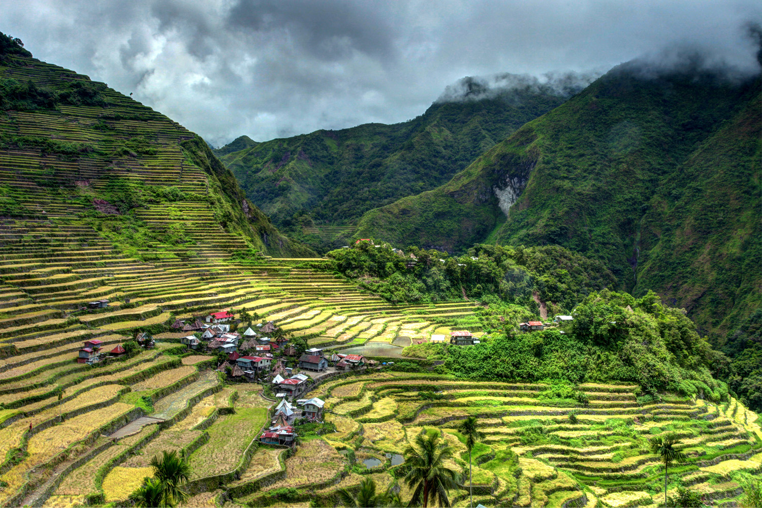 Rice Terrace2 - Phillippines.jpg