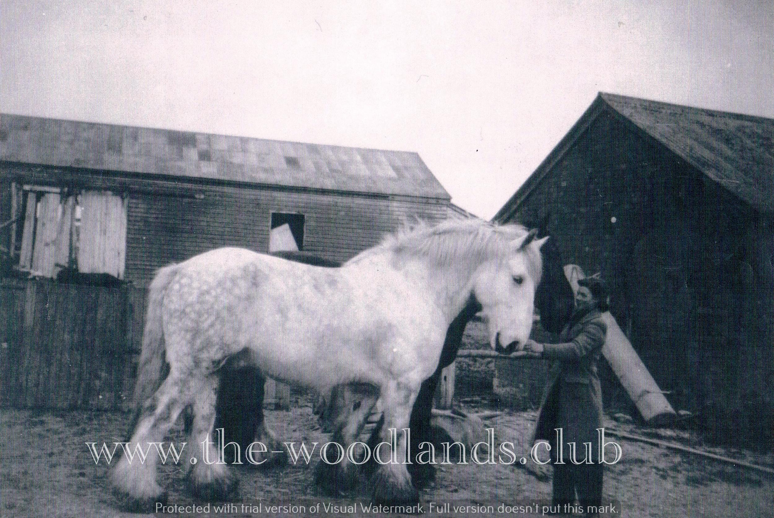 horse(a).jpg
