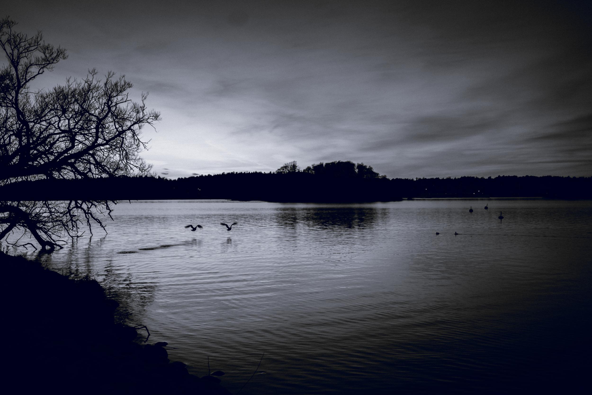 Birds in flight, Vinterviken, Stockholm