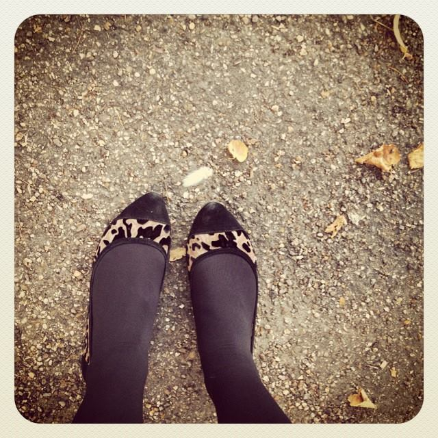 angel feathers and leopard shoes