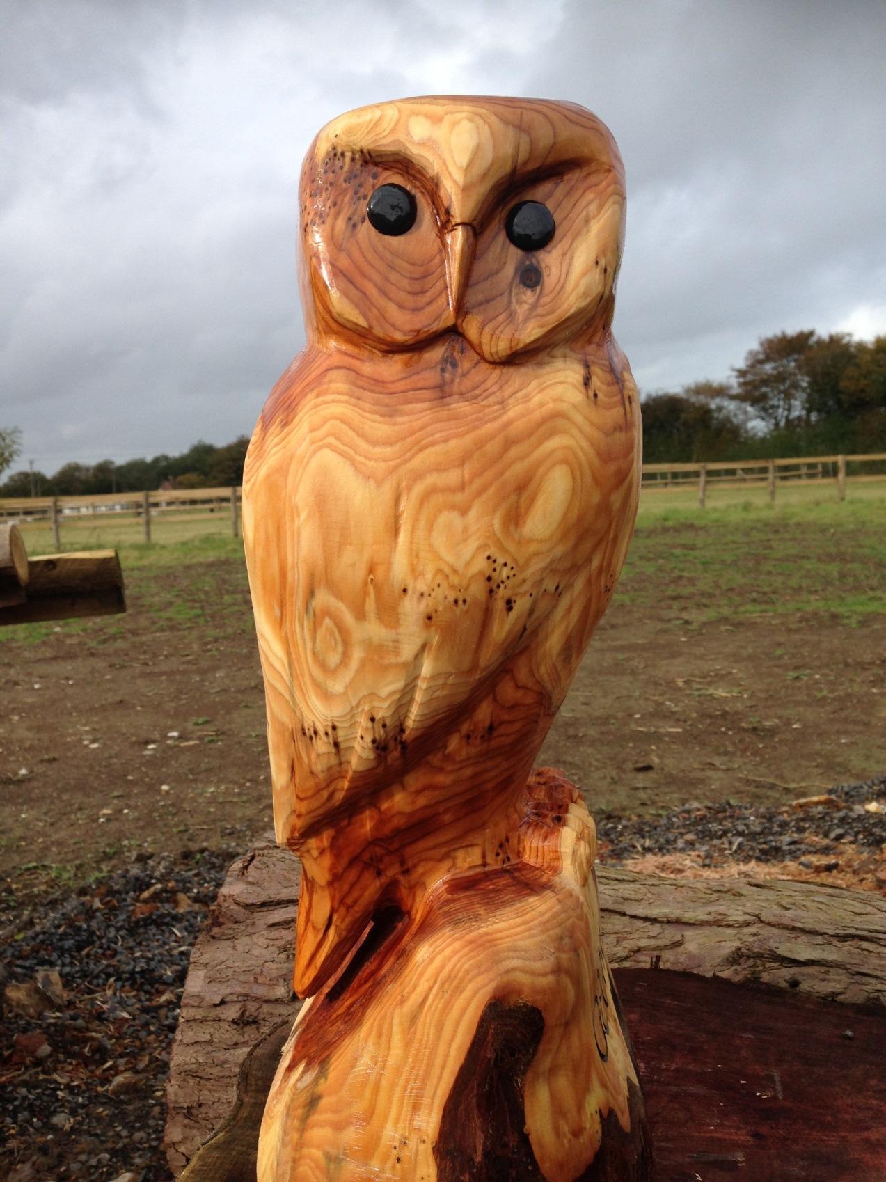 20141017 Owl (3).JPG