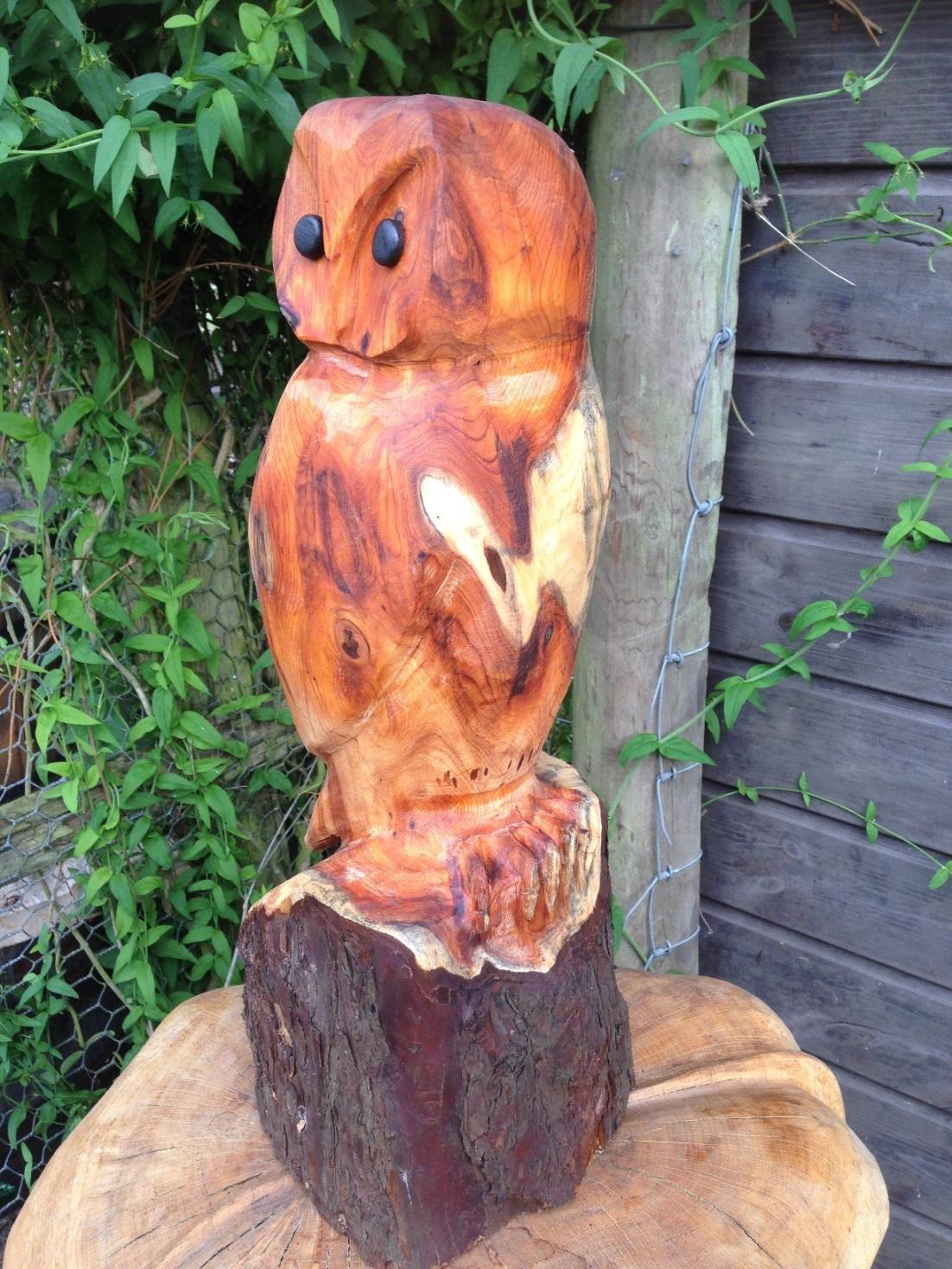 20150723 Owl in Yew (2).JPG