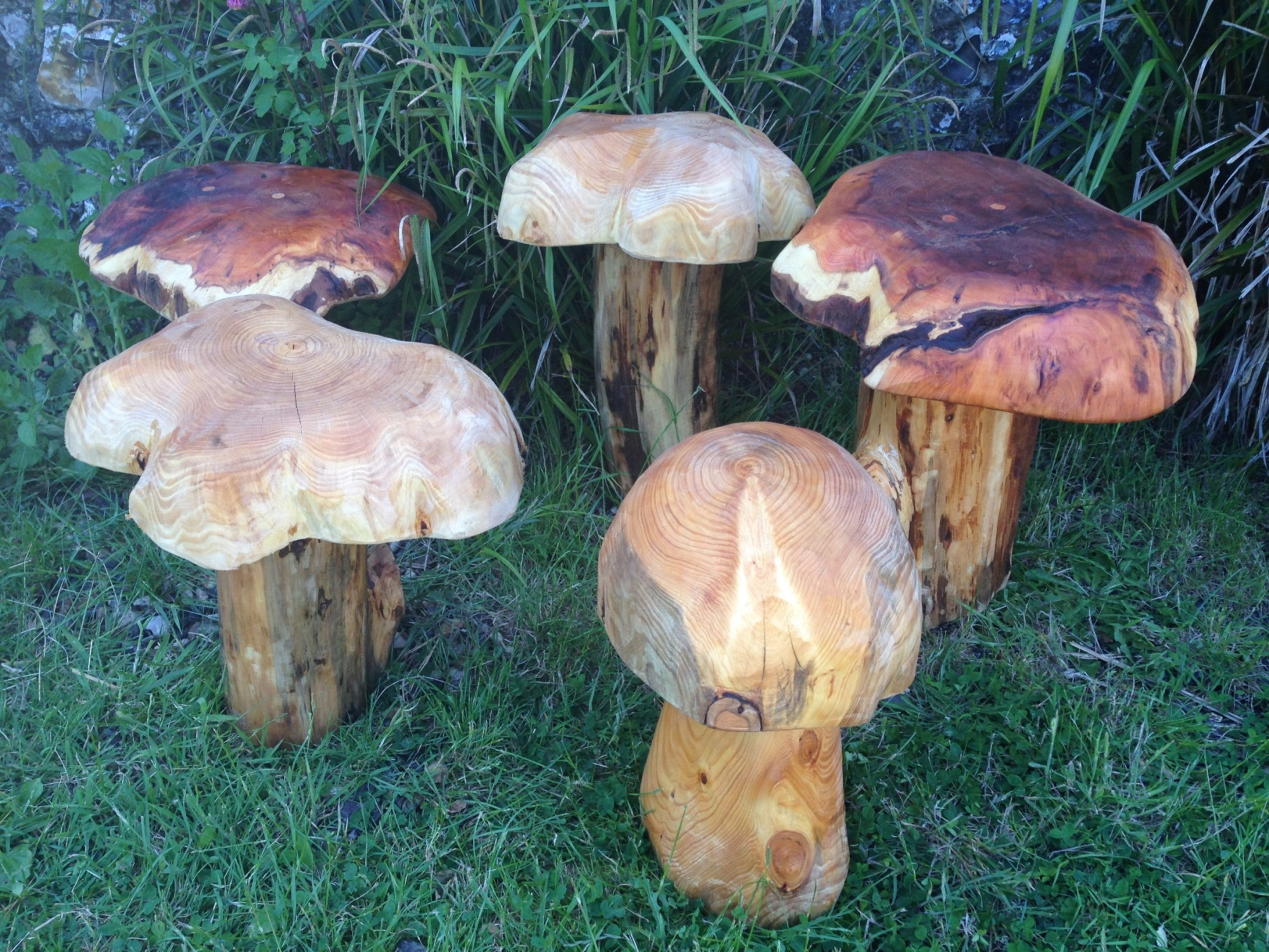 20150605 Mushrooms (1).JPG