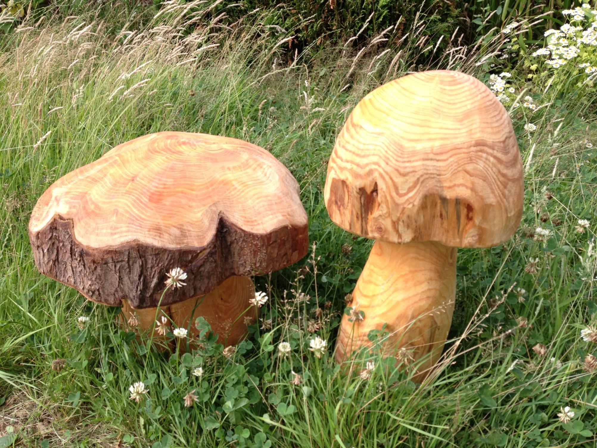 20150720 Mushrooms.JPG