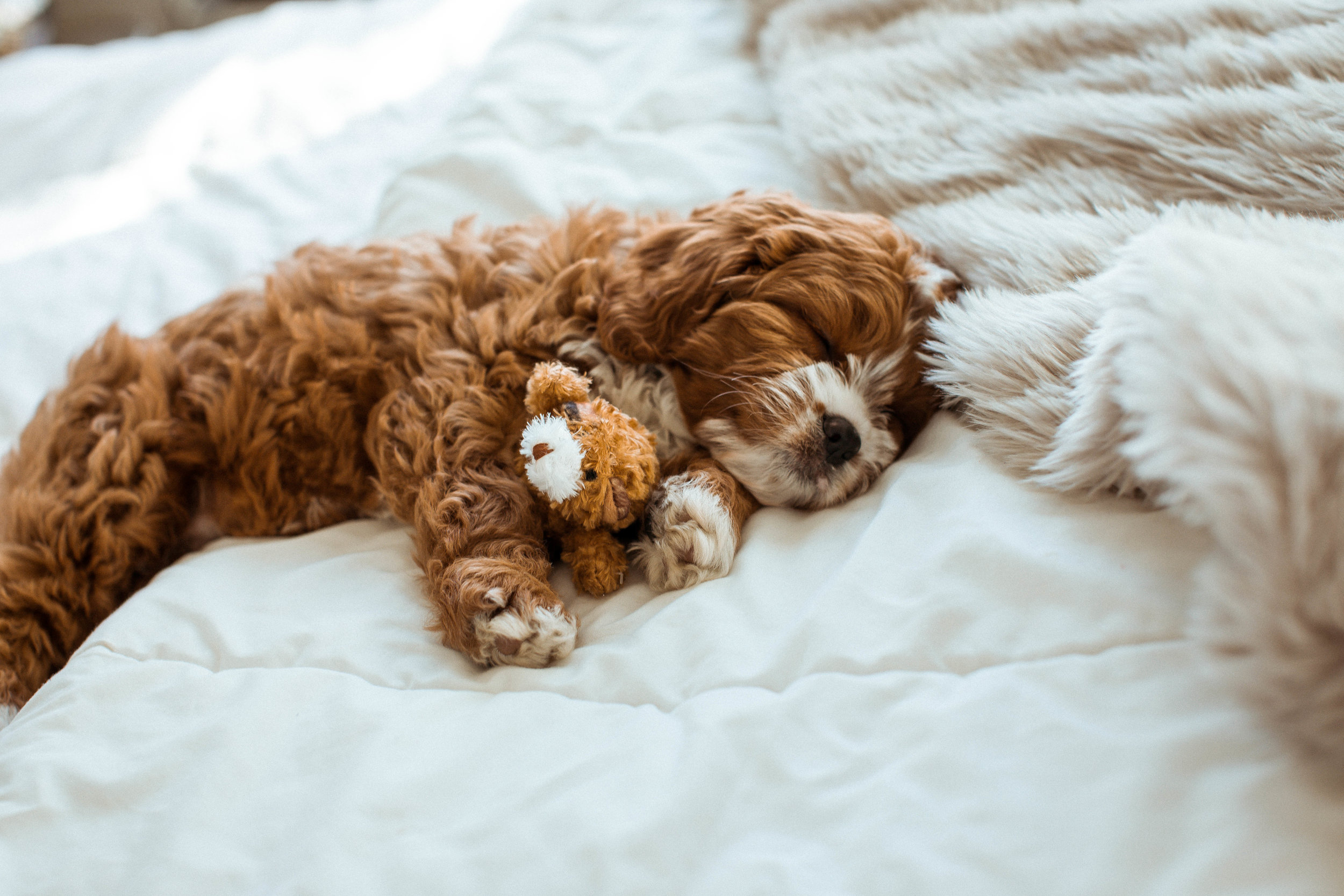 He loves his little stuffed bear so much he sleeps with it next to him every night.