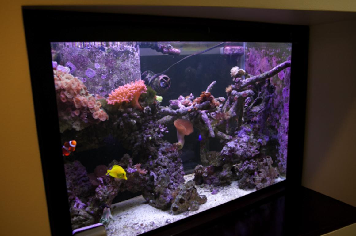 Bellevue Dental Arts Fish Tank