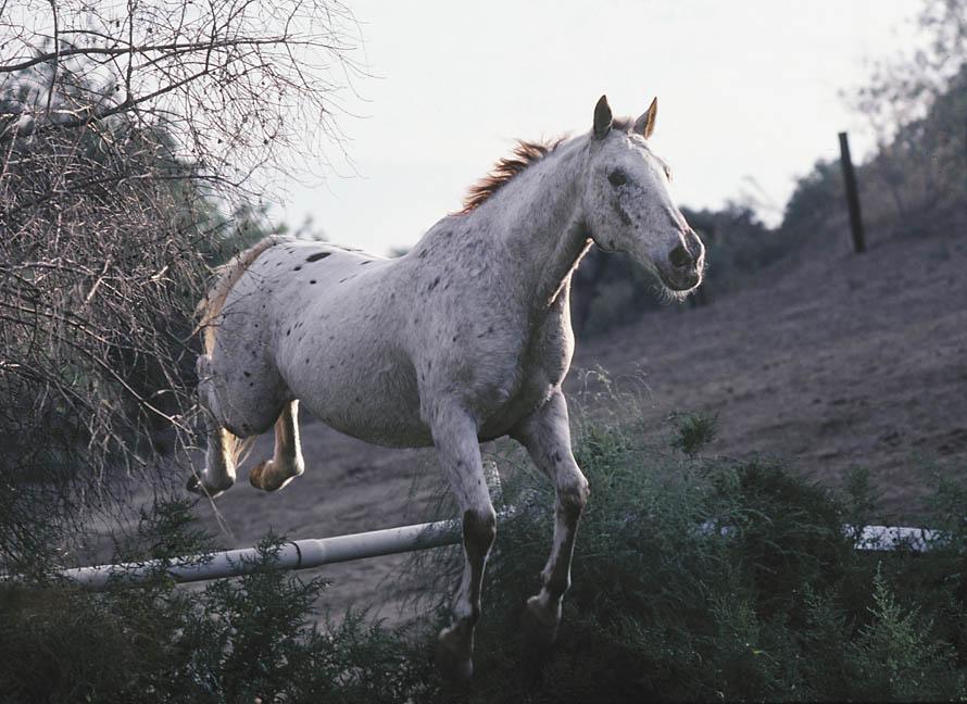 jumphorse.jpg