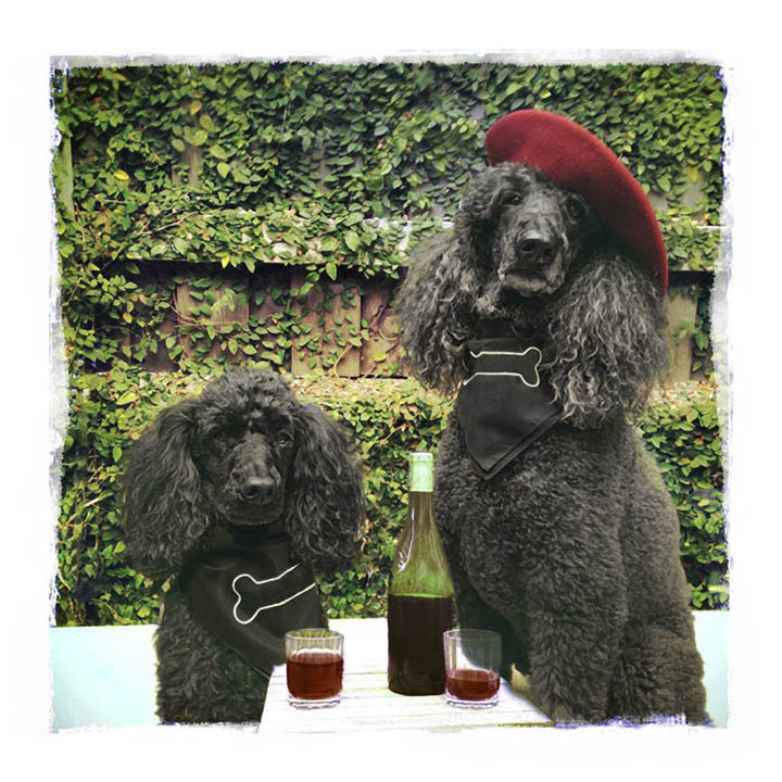 winedogs.jpg