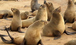 Seal Snorkeling Cape Town