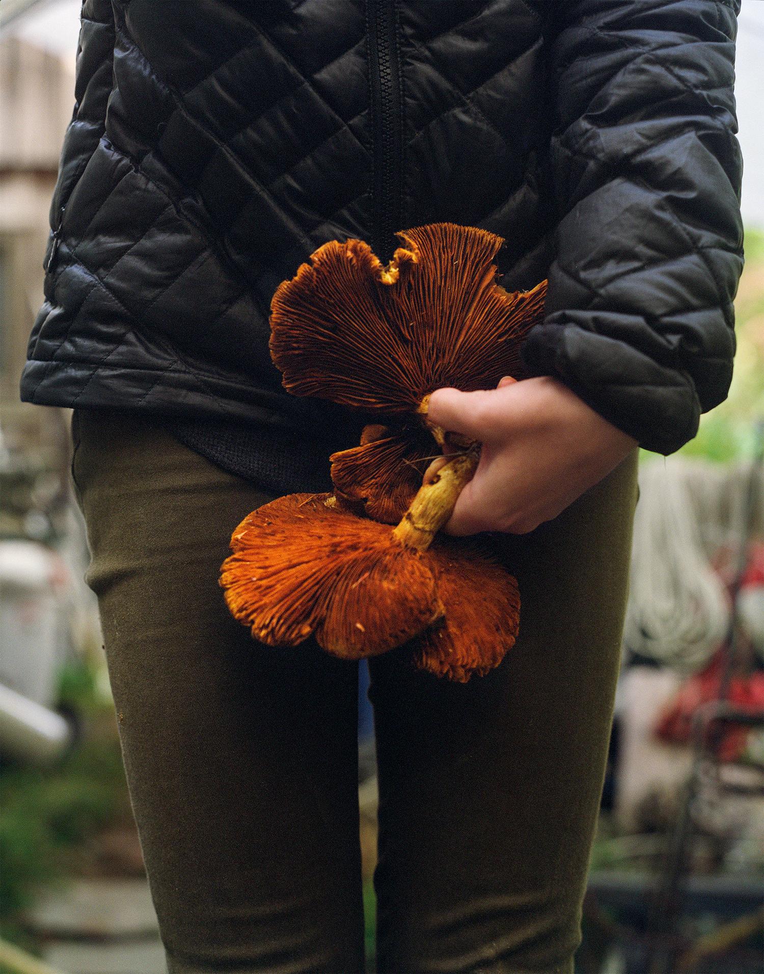 Fungus 10112015 002.jpg