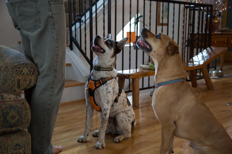 Two good dogs • Houston, TX